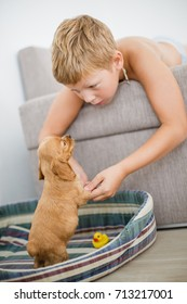 Adorable little puppy Cocker Spaniel near sofa with little boy in real home.