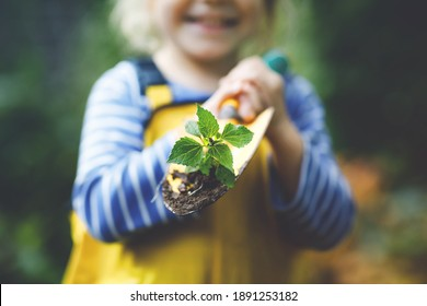 Adorable little toddler girl holding garden shovel with green plants seedling in hands. Cute child learn gardening, planting and cultivating vegetables in domestic garden. Ecology, organic food.