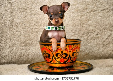 Adorable miniature Russkiy toy (Russian toy terrier) puppy in a hand-painted Russian souvenir bowl on a fur cover background.