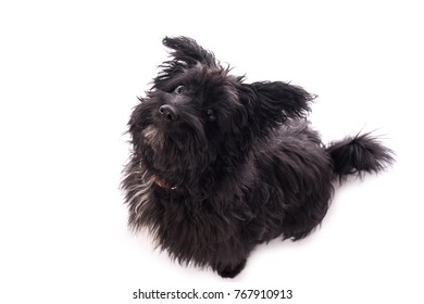 Adorable mixed breed dog isolated on a white background