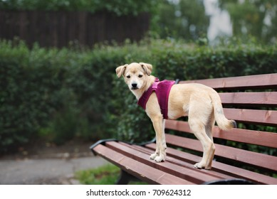 adorable mixed breed puppy posing on a bench