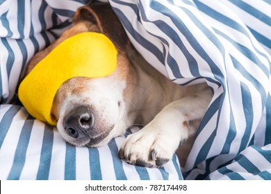 adorable napping dog in striped white and blue bed linen. Yellow bright sleeping mask. Good night, have good sleep