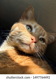Adorable orange tabby cat posing for the camera, with a light stripe covering half of his face.