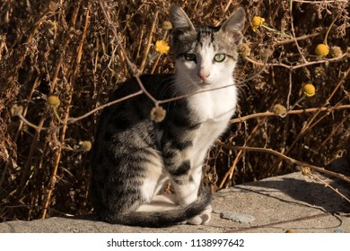 adorable outdoor little cats