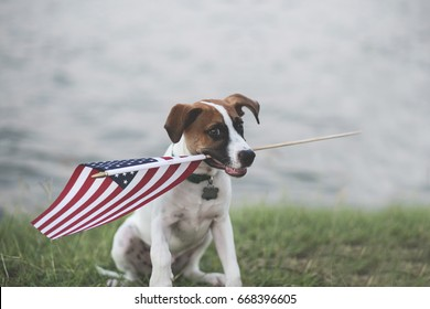 Adorable patriotic puppy with American flag