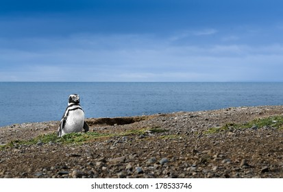 Adorable penguin and the Sea. High definition image.