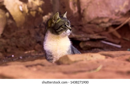 adorable photogenic adult street cat profile portrait looking side ways in wilderness rocky canyon desert brown nature outdoor environment
