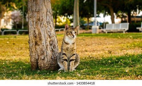 adorable photogenic cat portrait sit under a tree and looking side ways in park outdoor nature city square environment for pets