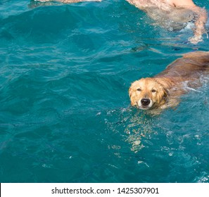 adorable photogenic dog posing and looking at camera in swimming time in open water environment