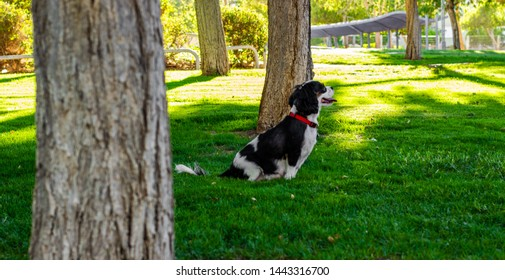 adorable and photogenic King Charles Cavalier dog profile portrait sitting on a green grass meadow and looking side ways in sunny spring park outdoor natural environment for walking with pets