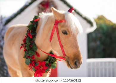 adorable pony with festive wreath near the small wooden house and snow-covered trees. New Year and Christmas time