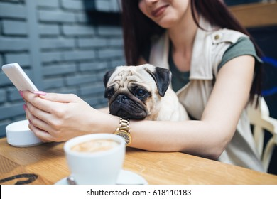 Adorable pug dog sitting in his owner's lap in cafe bar. Selective focus on dog.