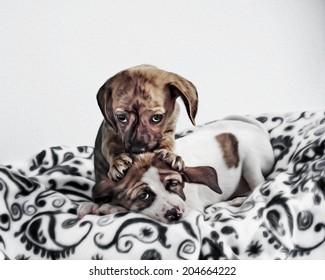 Adorable Puppies Kissing Cuddling Massaging Head Digitally Painted Photograph