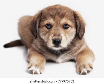 adorable puppy dog