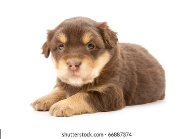 Adorable puppy isolated on a white background