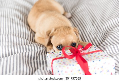 Adorable Puppy Playing with Small Wrapped Present