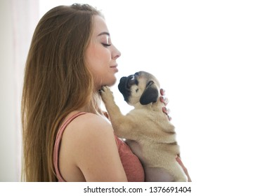 Adorable puppy of a pug on the hands of a beautiful woman, high key, gentle toning, the concept of cute pets