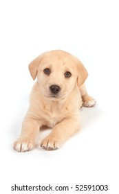 Adorable puppy resting on white background