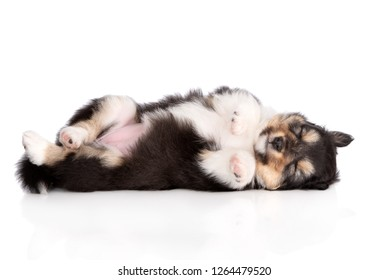 adorable puppy sleeping on the back