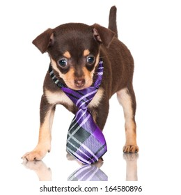fe699fa788a Jack Russell Terrier On White Background Stock Photo (Edit Now ...