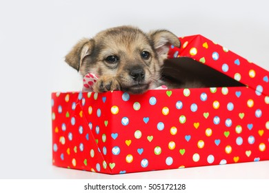 Adorable Puppy wearing polka dots bow tie sitting  in a red Cardboard Box