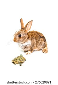 Adorable rabbit and turtle isolated on a white background