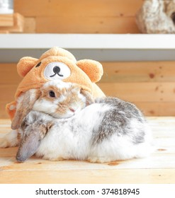Adorable Rabbits cuddling each other on wooden tables dressed up as Teddy Bear, Holland Lop Pure Breed, Selective Focus, Love and Valentine's concept