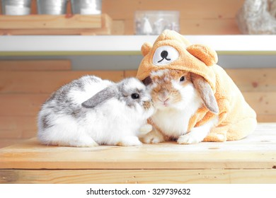 Adorable Rabbits on wooden tables dressed up for Halloween Cabdy Hunt, Holland Lop Pure Breed, Selective Focus