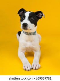 adorable rescue dog at an adoption center, with a bright sunny yellow background
