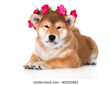 adorable shiba inu puppy in a flower crown