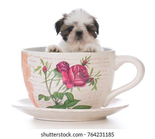 adorable shih tzu puppy in a tea cup on white background