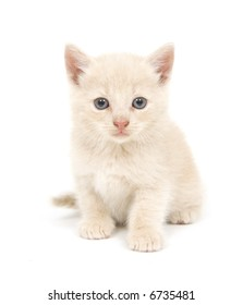 An adorable, shy yellow kitten sits on a white background