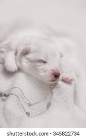 Adorable sleeping puppy, 1 week old puppy