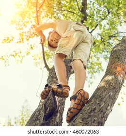 Adorable small boy has fun climbing on the tree at summer day. Happy childhood background
