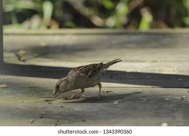 Adorable small brown bird eating birdseed on a wooden porch railing.