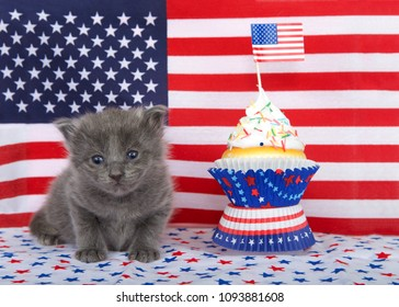 Adorable small fluffy grey kitten sitting on a red and blue star pattern blanket with American Flag in background, colorful patriotic cup cake with american flag, kitten looking directly at viewer.