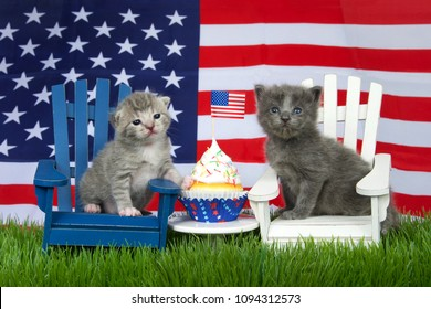 Adorable small fluffy grey kitten sitting on a white chair, grey and white tabby on blue chair in grass with American Flag in background, colorful patriotic cup cake with american flag