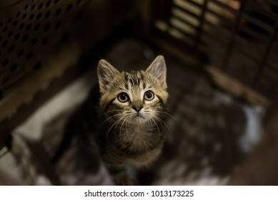 Adorable small sad kitten sitting in a cat carrier or crate waiting to be adopted at a pet fair