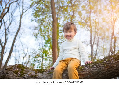 Adorable smiling little boy in the park on sunset sitting on the tree