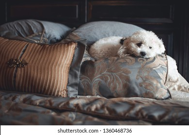 an adorable and soft white poodle maltese or maltipoo  with a pink bow laying comfortably on decorative pillows while enjoying the sun light