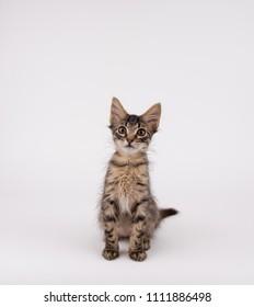 Adorable Tabby Kitten on Light Background