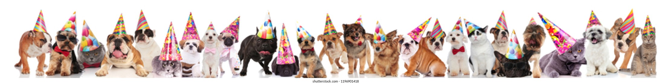 adorable team of many party pets with birthday caps standing, sitting and lying on white background