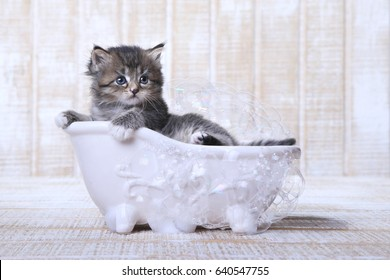 Adorable Tiny Kitten in a Bathtub With Bubbles