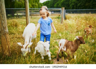 Adorable toddler girl playing with goats at farm. Child familiarizing herself with animals. Farming and gardening for small children. Outdoor summer activities for kids