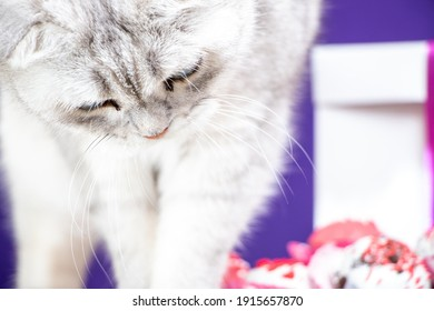 Adorable Valentines cat and some love chocolates