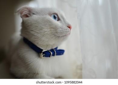Adorable white cat