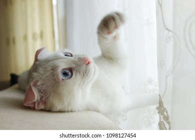Adorable white kitten in front of the window