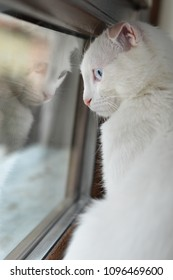 Adorable white kitten and her reflection over the window