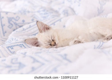 Adorable White and Tan Kitten Sleeping on Soft Bed