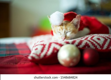 Adorable yellow and white stripped cat lying down on christmas day with round ornaments by its side.Cat with santa claus' red costume.Sleepy feline cozy and warm on cushion pillow with pattern
